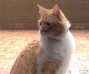 Rompicapo di Gatto bianco e marrone