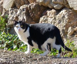 Rompicapo di Gatto bianco e nero