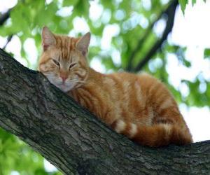 Rompicapo di Gatto che riposa sul ramo di un albero