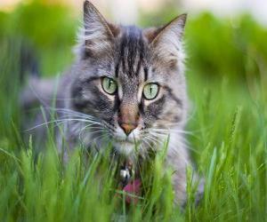 Rompicapo di Gatto con la collana