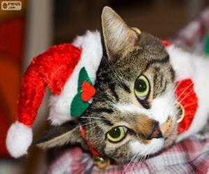 Rompicapo di Gatto con un cappello di Babbo Natale