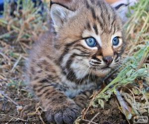 Rompicapo di Gatto curioso