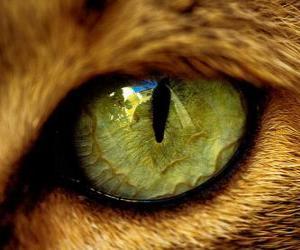 Rompicapo di gatto dagli occhi verdi