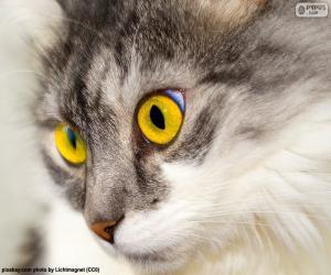 Rompicapo di Gatto di gli occhi gialli