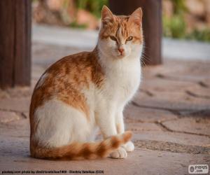 Rompicapo di Gatto di seduta