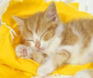 Rompicapo di Gatto dorme tranquillamente