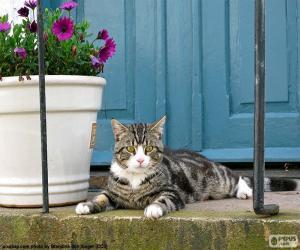 Rompicapo di Gatto e fioriera