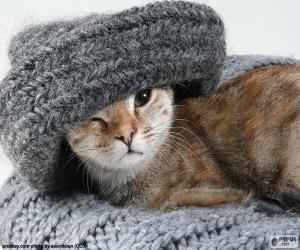 Rompicapo di Gatto e sciarpa
