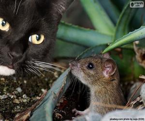 Rompicapo di Gatto e topo