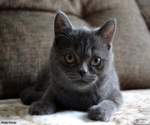 Rompicapo di Gatto grigio