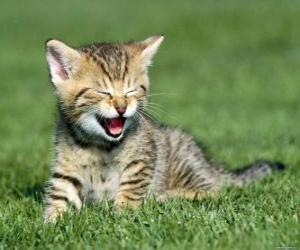 Rompicapo di Gatto in giardino