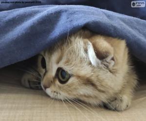 Rompicapo di Gatto nascosto
