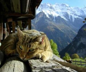 Rompicapo di Gatto nel paesaggio