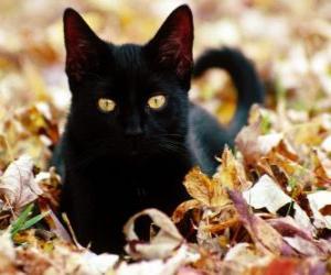 Rompicapo di Gatto nero