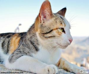 Rompicapo di Gatto osservando