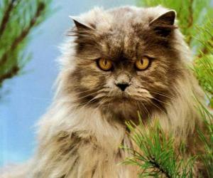 Rompicapo di Gatto persiano