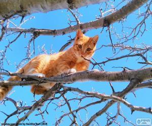 Rompicapo di Gatto su un ramo