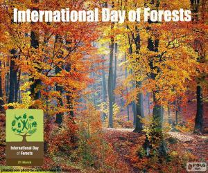 Rompicapo di Giornata internazionale delle foreste