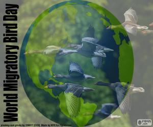 Rompicapo di Giornata mondiale degli uccelli migratori