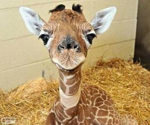 Rompicapo di Giraffa bambino