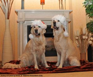 Rompicapo di Golden retriever, Natale