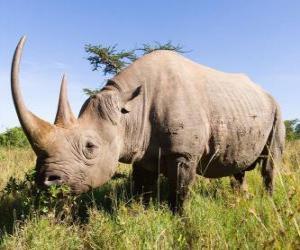 Rompicapo di Grande rinoceronte