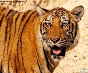 Rompicapo di Grande tigre
