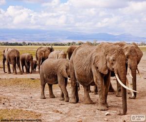 Rompicapo di Gruppo di elefanti