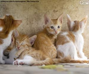 Rompicapo di Gruppo di gattini