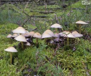 Rompicapo di Gruppo funghi