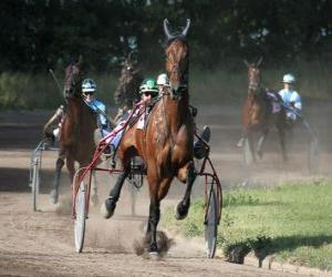 Rompicapo di Harness Racing