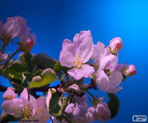 Rompicapo di I fiori di melo