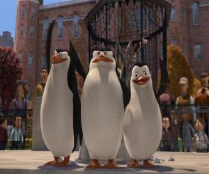 Rompicapo di I pinguini dil zoo di Central Park