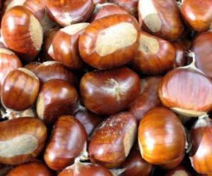 Rompicapo di Il castagno, il frutto dell'albero del castagno