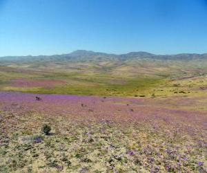 Rompicapo di Il deserto di Atacama in Cile florida