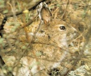 Rompicapo di Il pennello coniglio