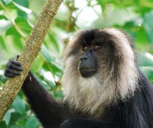 Rompicapo di Il sileno o scimmia dalla barba bianca
