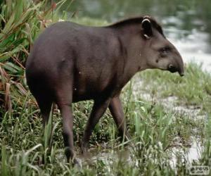 Rompicapo di Il tapiro