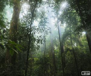 Rompicapo di Interno della giungla