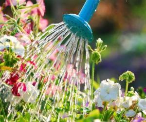 Rompicapo di Irrigazione fiori
