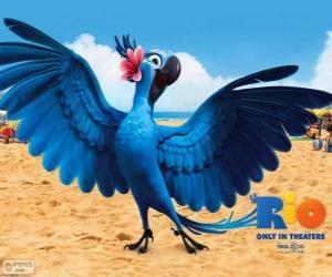 Rompicapo di Jewel è un ara bellissima femmina nel film Rio