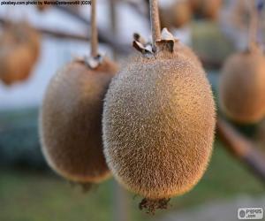 Rompicapo di Kiwi nell'albero
