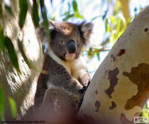 Rompicapo di Koala in un albero