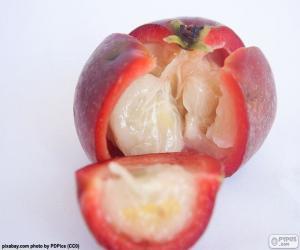 Rompicapo di Kokam frutto