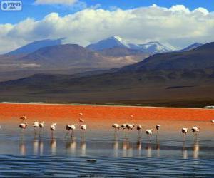 Rompicapo di La Laguna Colorada, Bolivia
