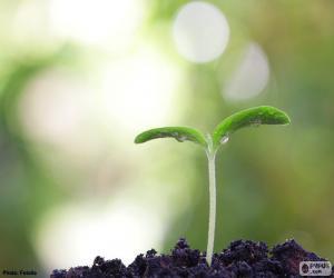 Rompicapo di La nascita di una pianta
