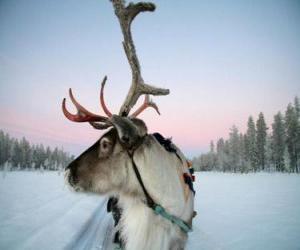 Rompicapo di La renna di Natale tirando una slitta