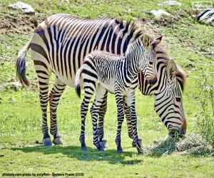 Rompicapo di la zebra del bambino e sua madre