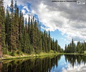 Rompicapo di Lago Irene, Stati Uniti d'America