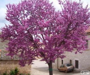 Rompicapo di L'albero di Giuda o di Giudea